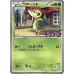 Pokemon 2011 Pokemon BW Workbook Snivy Tepig Oshawott Set of 3 Promo Cards #075-077/BW-P